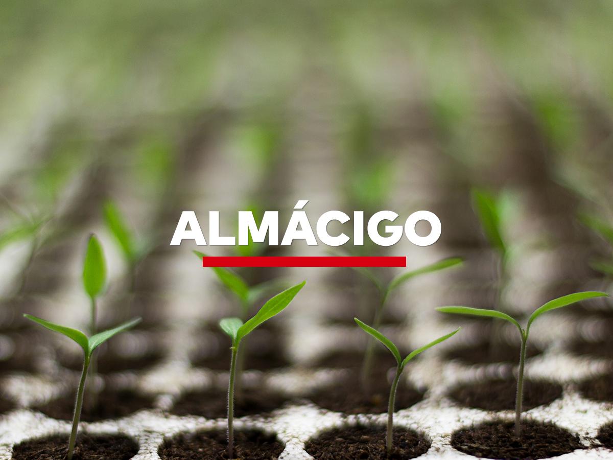ALMÁCIGO | LUKAFE